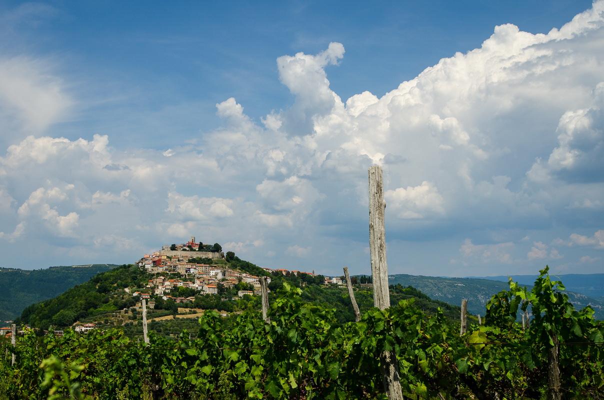 Motovun wine
